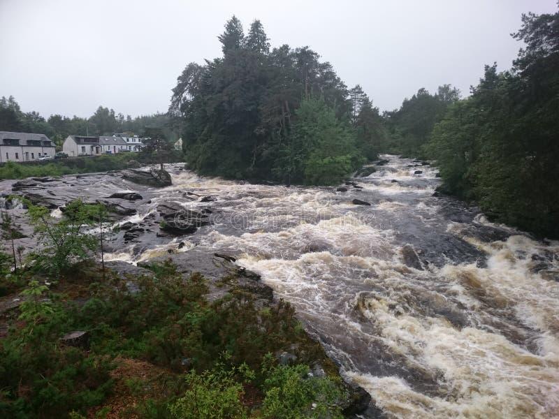 Scots лес стоковое изображение rf