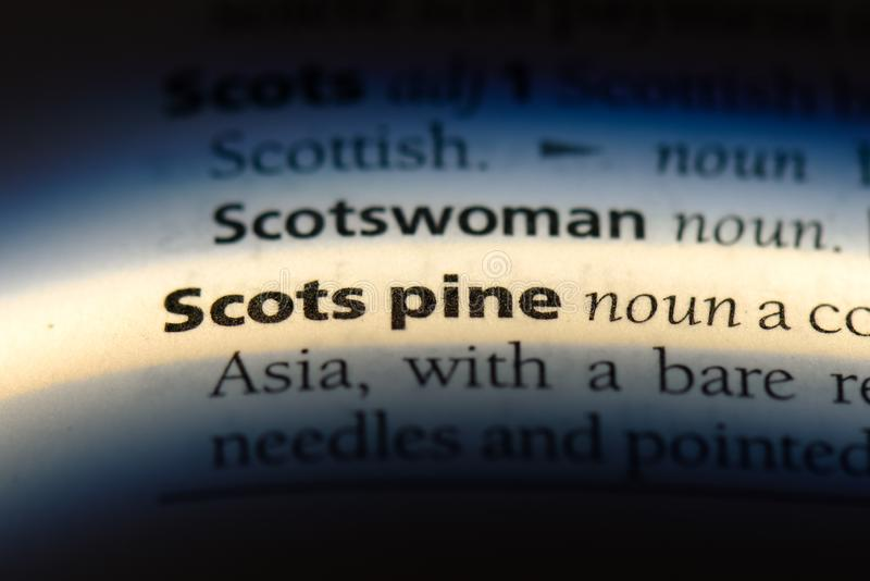 Scots pine. Word in a dictionary.  concept royalty free stock photo