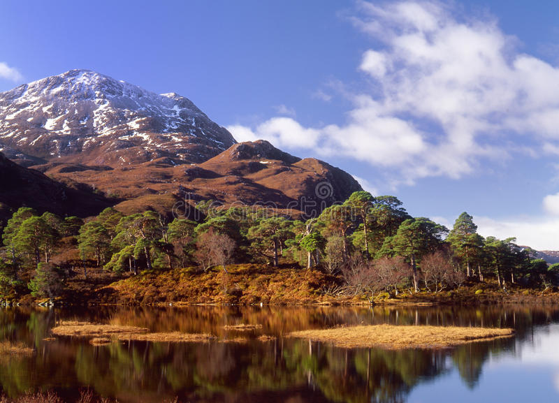 Scots pines(Pinus sylvestris) loch Clair,Scotland. This image shows how the generic forests in Scotland should be (Caledonian), this is loch Clair, in the royalty free stock image