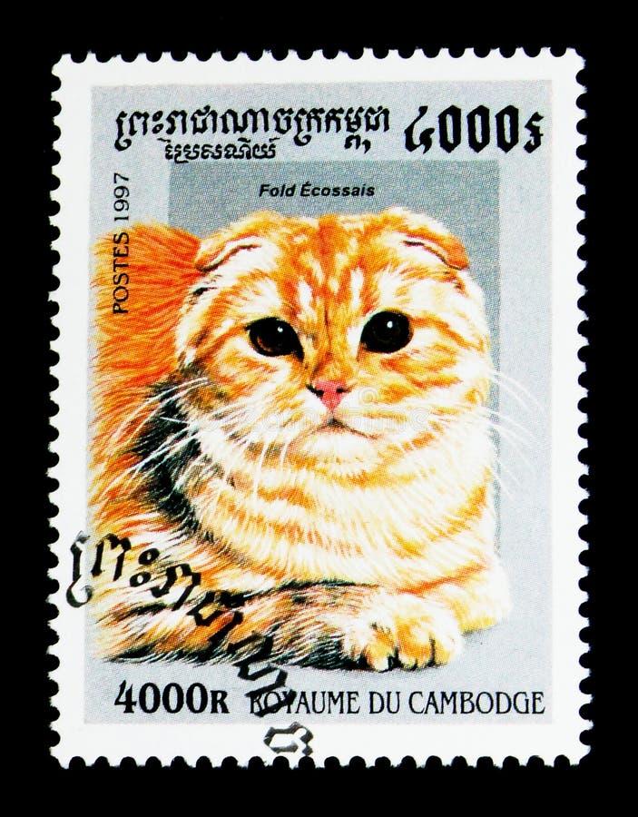 Scottish складывают catus silvestris кошки, serie домашних кошек, около 1997 стоковые изображения