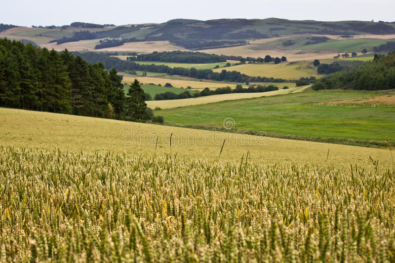Download Scottish Countryside Stock Photography - Image: 27833492