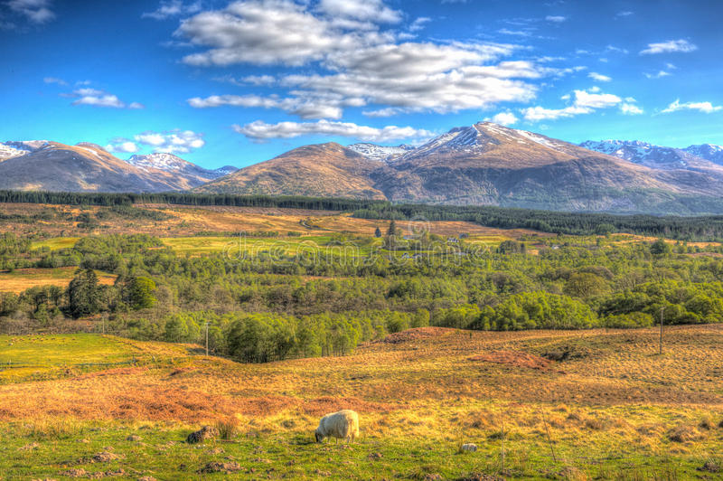 Scottish countryside and snow topped mountains Ben Nevis Scotland UK in colourful HDR. Scottish countryside and snow topped mountains Ben Nevis Scotland UK in royalty free stock photo