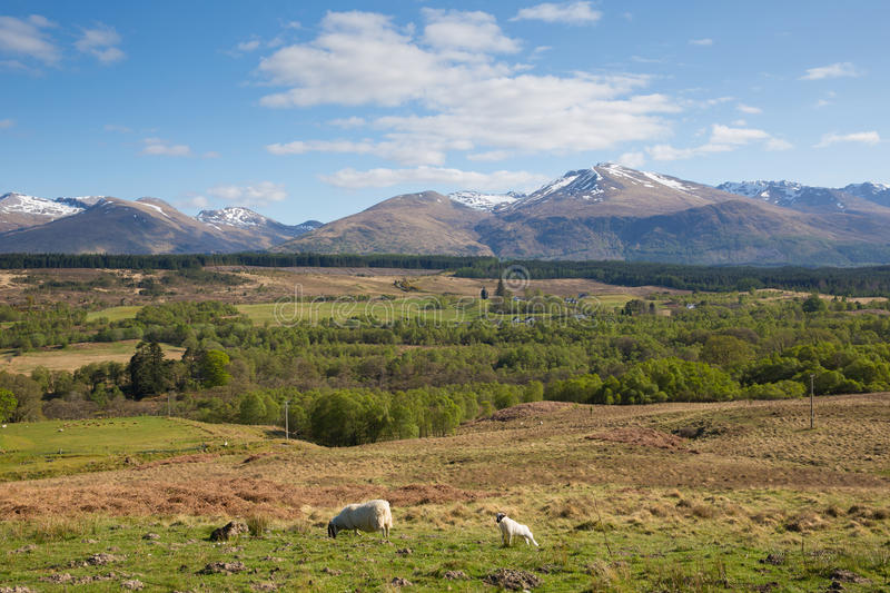 Scottish countryside and snow topped mountains Ben Nevis Scotland UK in the Grampians Lochaber Highlands. Close to the town of Fort William in summer royalty free stock photography
