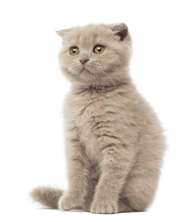 Download Scottish Fold Kitten Sitting, 9 Weeks Old Stock Images - Image: 27270904