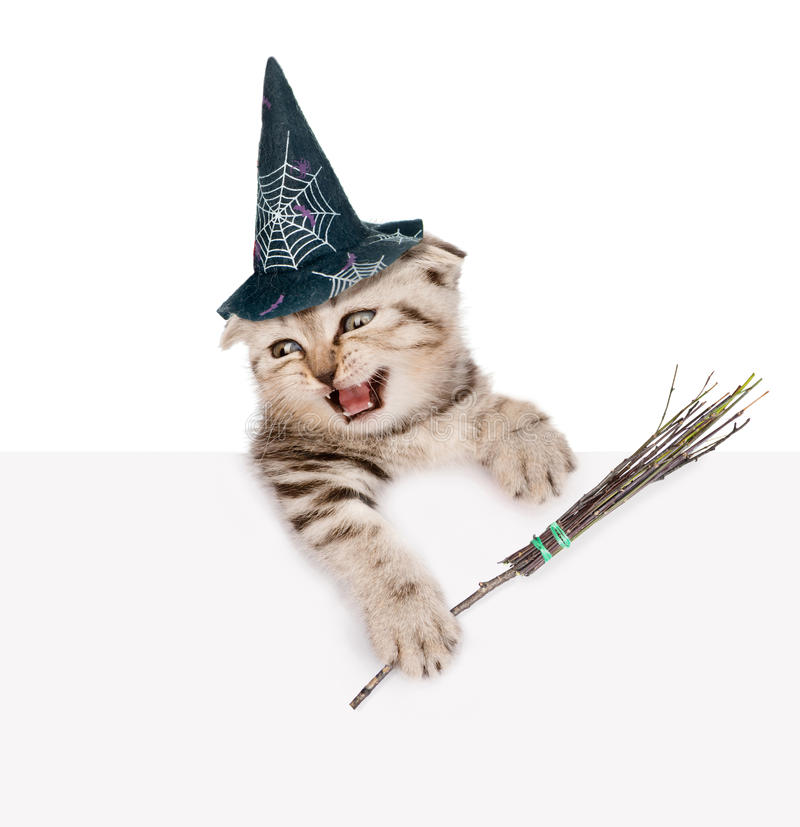 Scottish kitten with hat for halloween and with witches broom stick looking out because of the poster. isolated on white. Background stock photo