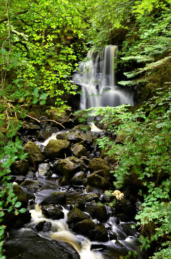 Free Scottish Landscapes - Waterfall In Aros Forest Park Royalty Free Stock Images - 125542919