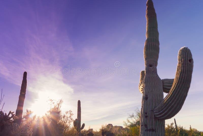 Scottsdale Arizona desert sunset stock photography