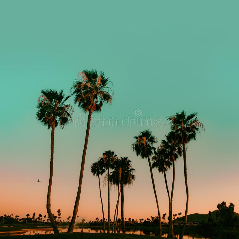 Scottsdale Arizona, usa Słońce sety nad drzewkami palmowymi dalej obrazy stock
