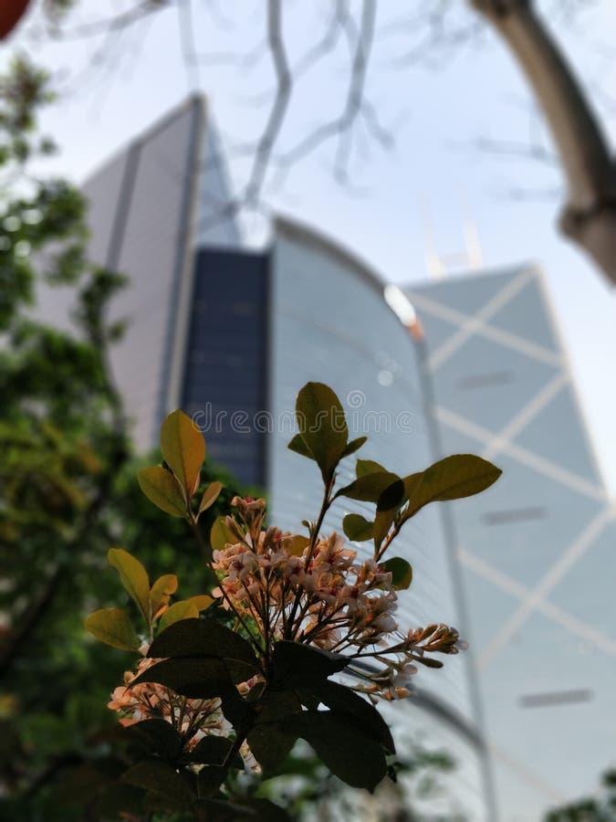 Scrappers do céu em Hong Kong de baixo do borrado foto de stock royalty free