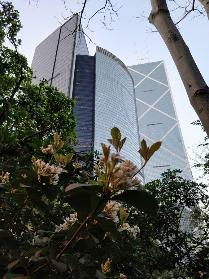 Scrappers do céu em Hong Kong de baixo de fotos de stock royalty free