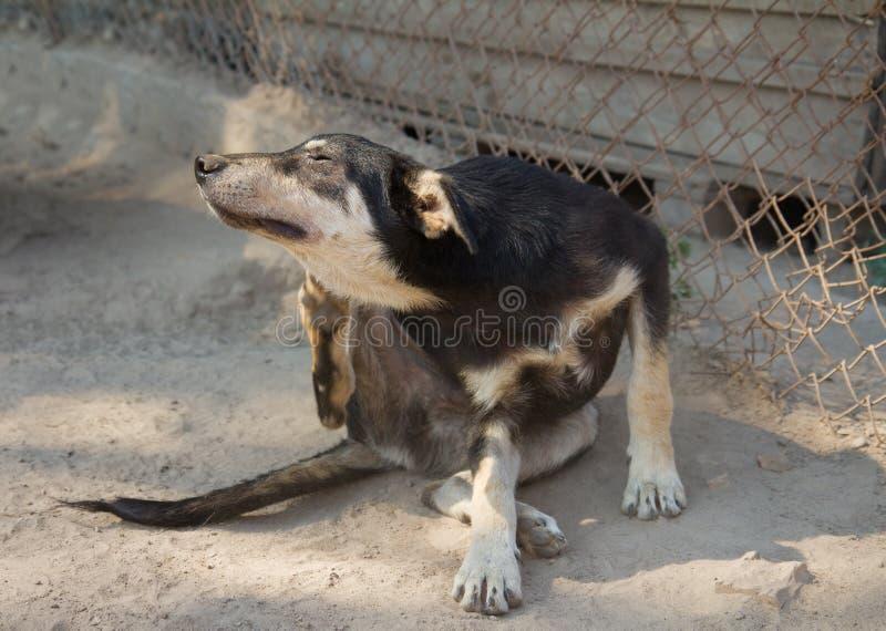 Scratch del cane del riparo immagini stock