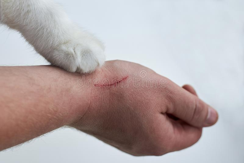 Scratch on a man`s hand made by a cat, a cat`s paw on a hand of an owner on a white background. Close-up stock photography