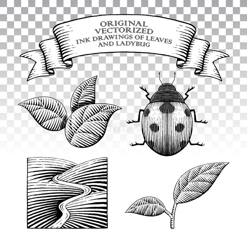 Scratchboard stylu atramentu rysunki liście i biedronka ilustracja wektor