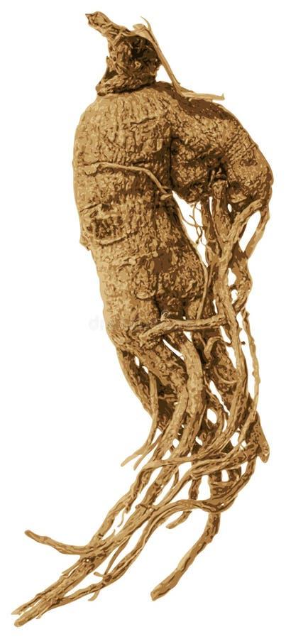 Free Screaming Mandrake Root. Royalty Free Stock Images - 99462609