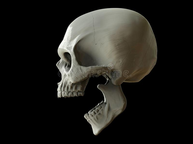 Screaming skull of death royalty free stock photos