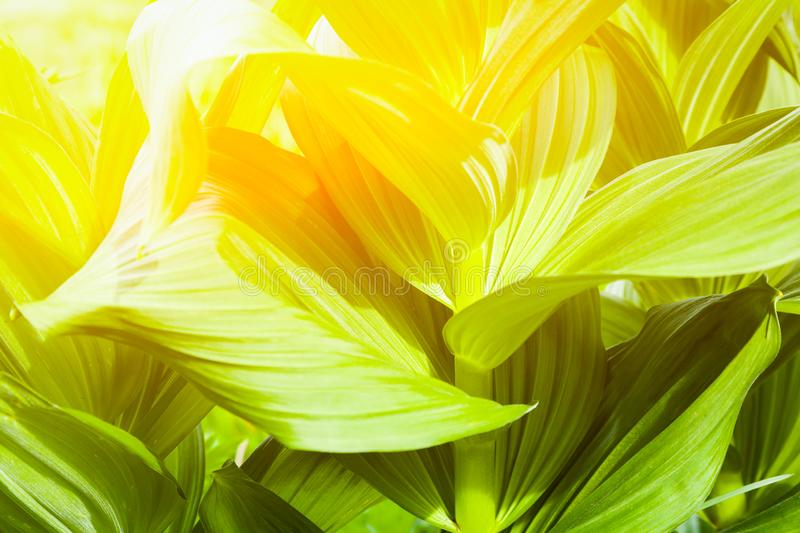 Screensaver for your desktop with natural plants. Close-up green leaves under the bright summer sun. Plant texture pattern. Screensaver for your desktop with stock images