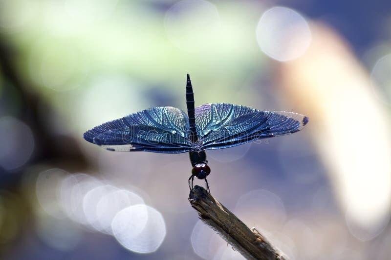 Download Scrematrice della farfalla immagine stock. Immagine di intercettore - 56891119