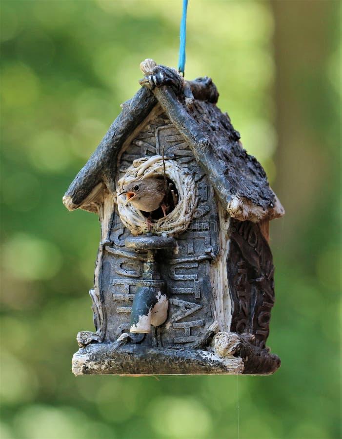 Scricciolo delle case pazzo! fotografie stock libere da diritti
