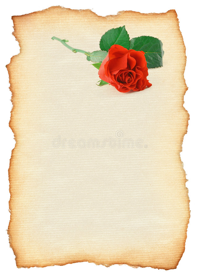 Scroll with rose vector illustration