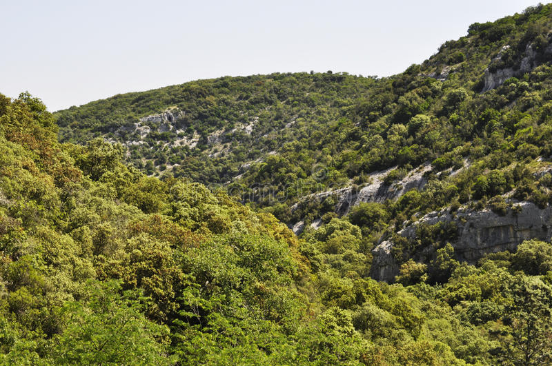 Scrubland. In botany , scrubland ( Provencal garrigo ) is a plant formation characteristic of the Mediterranean region , close to the maquis royalty free stock photos