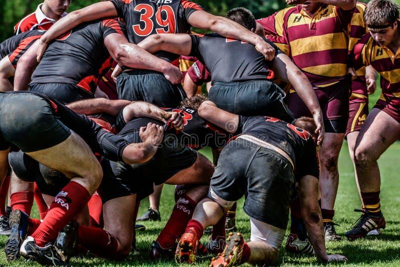 Scrum da união do rugby imagens de stock