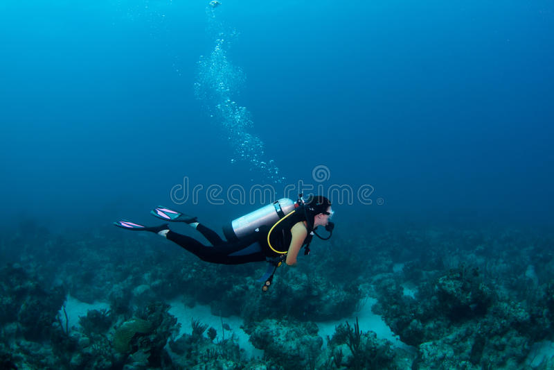 Download Scuba diver stock image. Image of bahamas, ocean, coral - 28871711