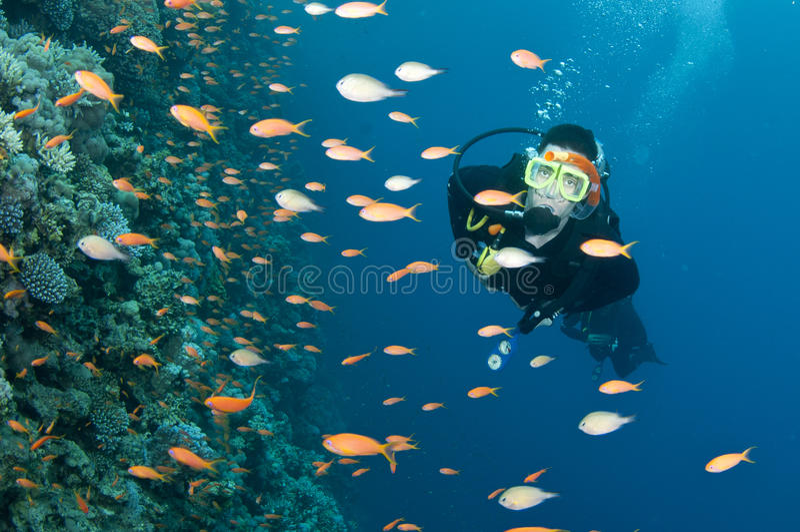 Scuba diver and colorfull fish stock image