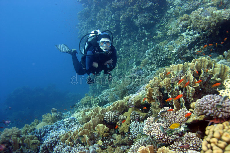 Scuba diver & the coral reef. Photo was made in the red sea in the year 2006 stock photos