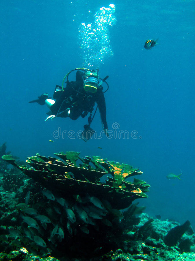 Scuba diver and coral reef royalty free stock image