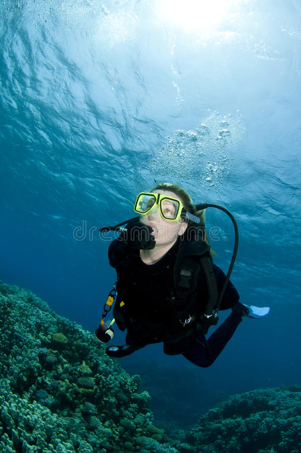 Scuba diver exploring undersea royalty free stock images