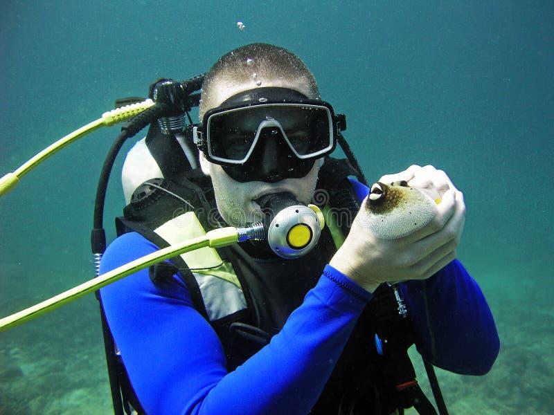 Scuba diver holding fish, Thailand stock images
