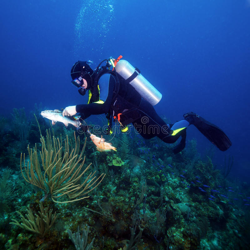Scuba Diver Hunting Fishes royalty free stock photography