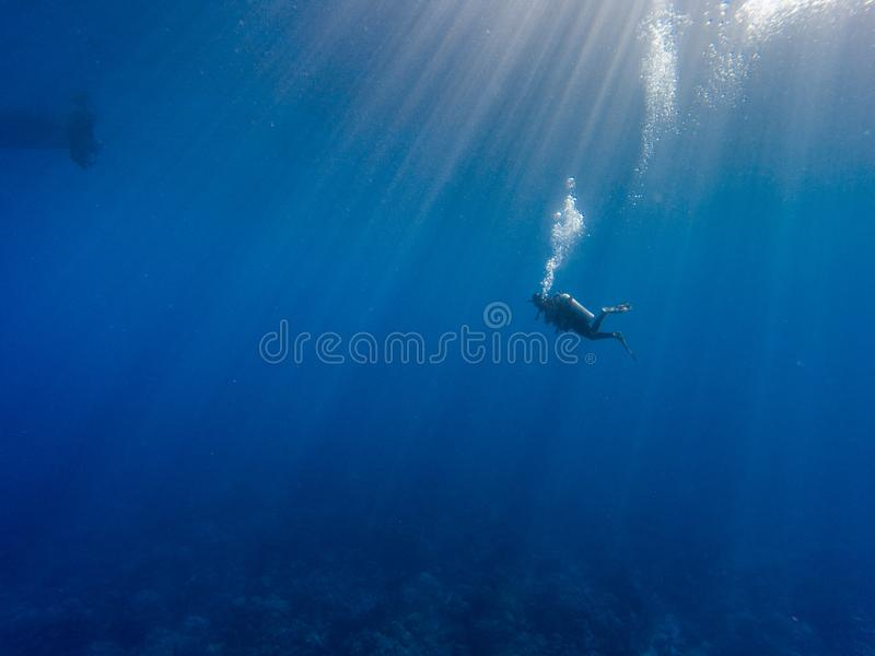 Scuba diver in Pacific ocean. Scuba diver in crystal clear waters of the Pacific ocean royalty free stock photos