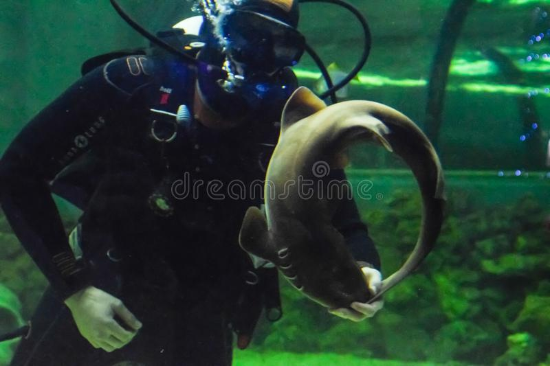 Scuba Diver plays with cat shark royalty free stock photography