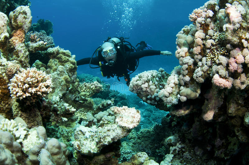 Scuba diver in shallow water stock image