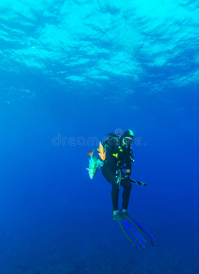 Scuba diver with speargun and dead fishes stock image