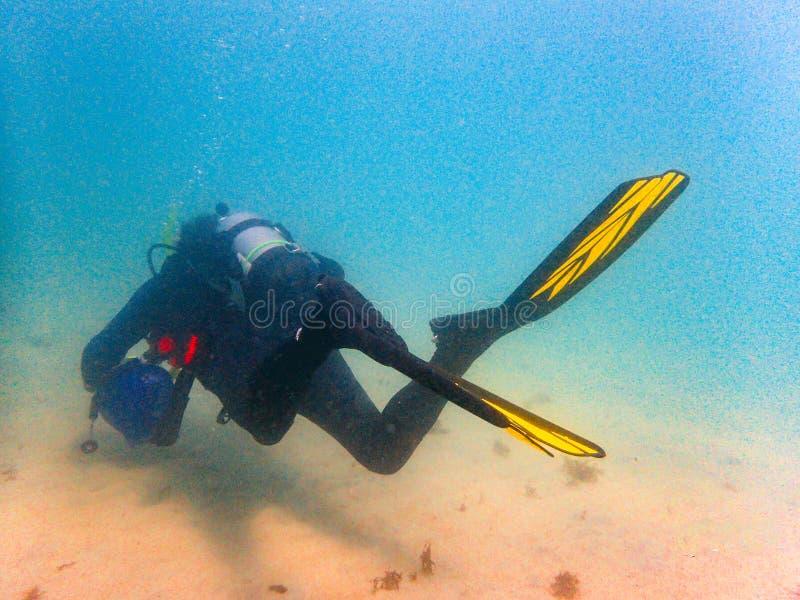Scuba Diver swimming through the ocean stock images