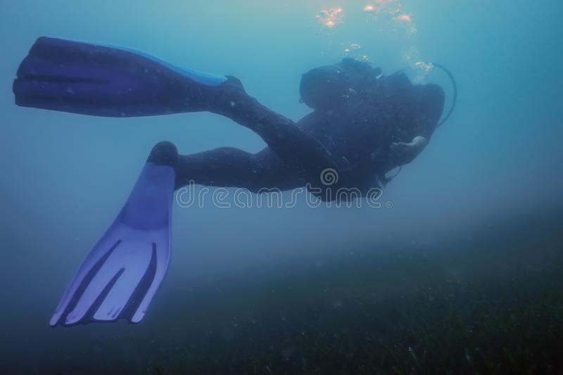 Scuba Diver Swimming Underwater Explores Reef and Examines Seabed. Underwater royalty free stock image