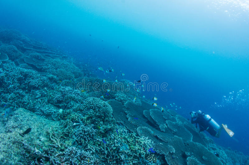 Download Scuba Diver Take Photo Royalty Free Stock Photography - Image: 27985877