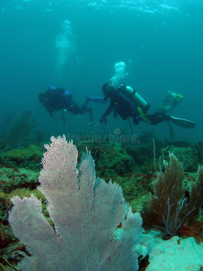 Scuba Divers royalty free stock photos