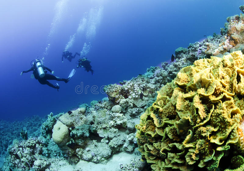 Scuba divers on coral reef stock photos
