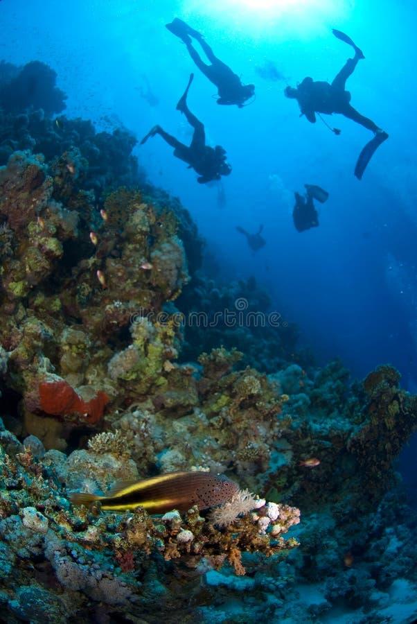 Free Scuba Divers Exploring Royalty Free Stock Photos - 3501138