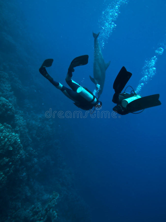 Scuba divers underwater dolphin encounter stock photography