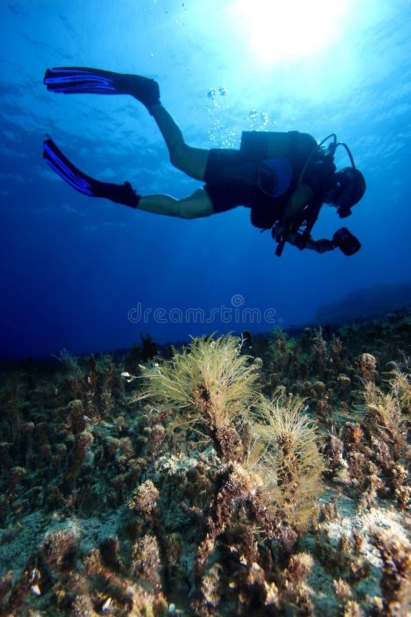 Download Scuba-Diving stock photo. Image of scuba, turkey, fins - 12176864