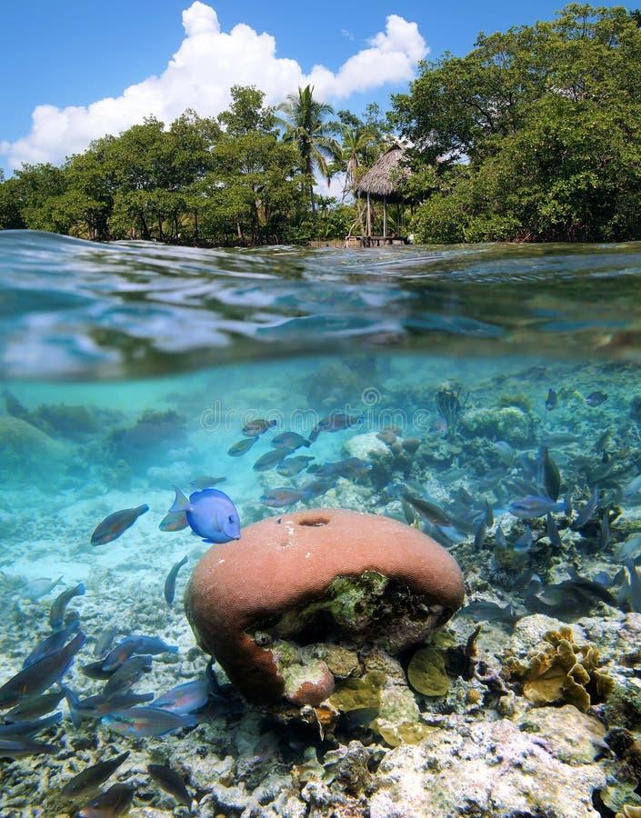 Scuba diving in Bocas del Toro royalty free stock photography
