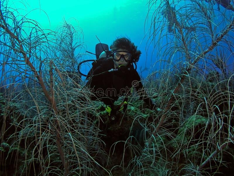 Scuba diving female underwater stock photos