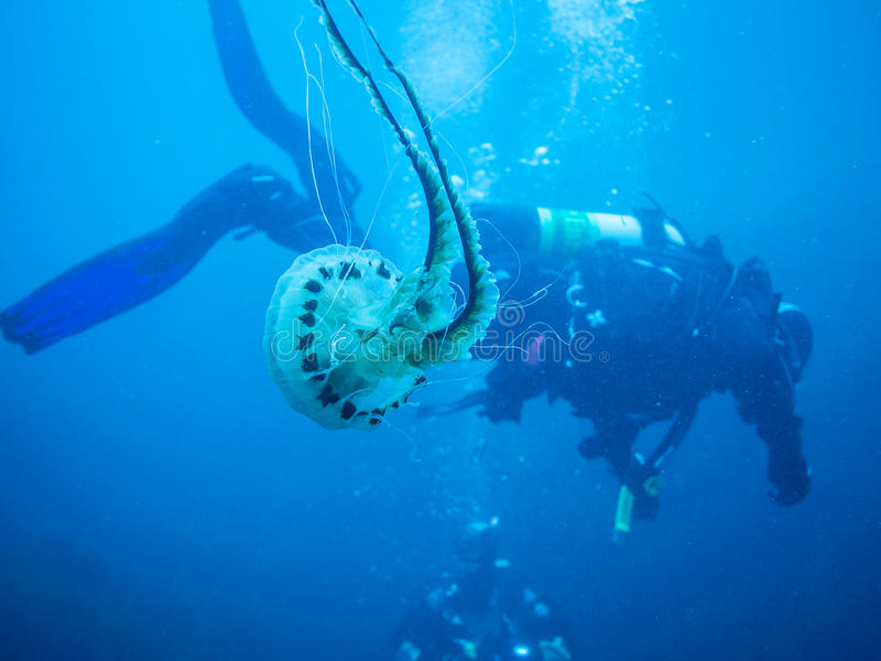 Scuba Diving In Ireland Royalty Free Stock Photography