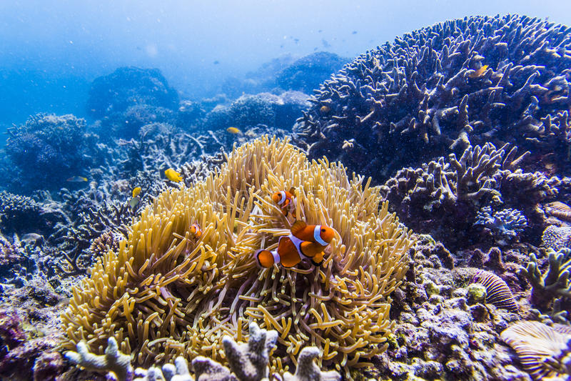 scuba diving with nemo fish royalty free stock photo