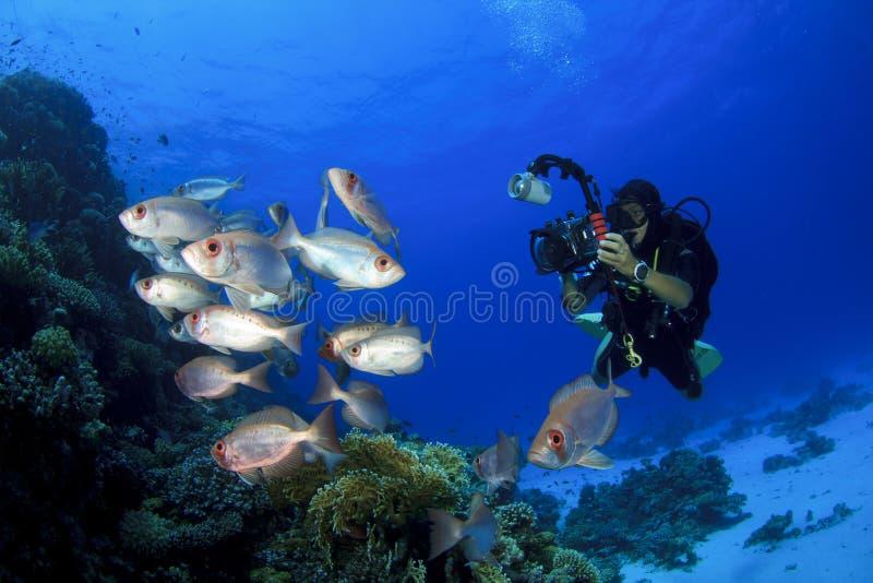 Scuba-duiker en Vissen royalty-vrije stock afbeelding