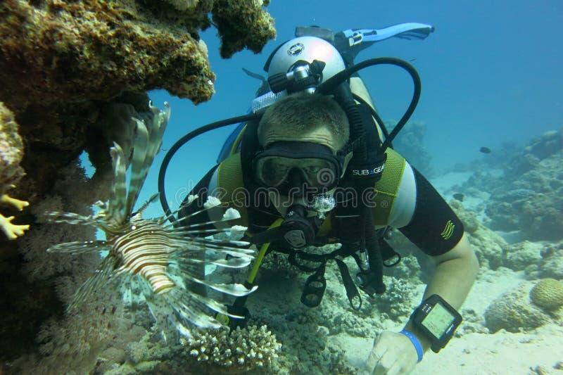 Scuba-duiker en vissen in het Rode Overzees royalty-vrije stock fotografie